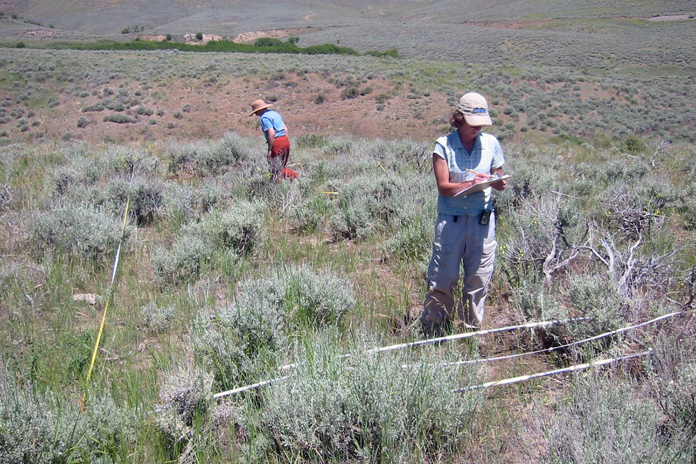 Providing ecological analysis to conservation partners