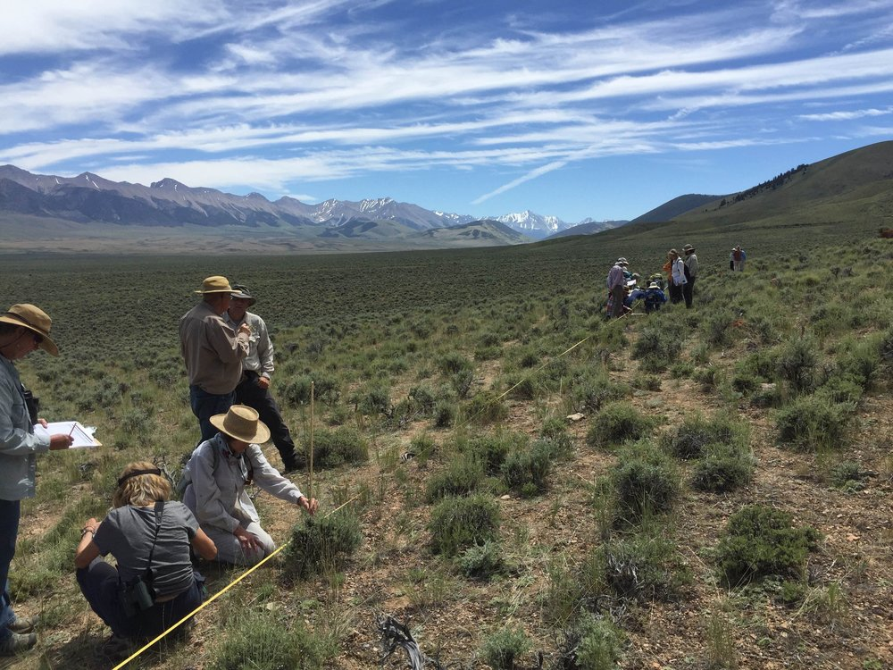 Creating conservation solutions through citizen science