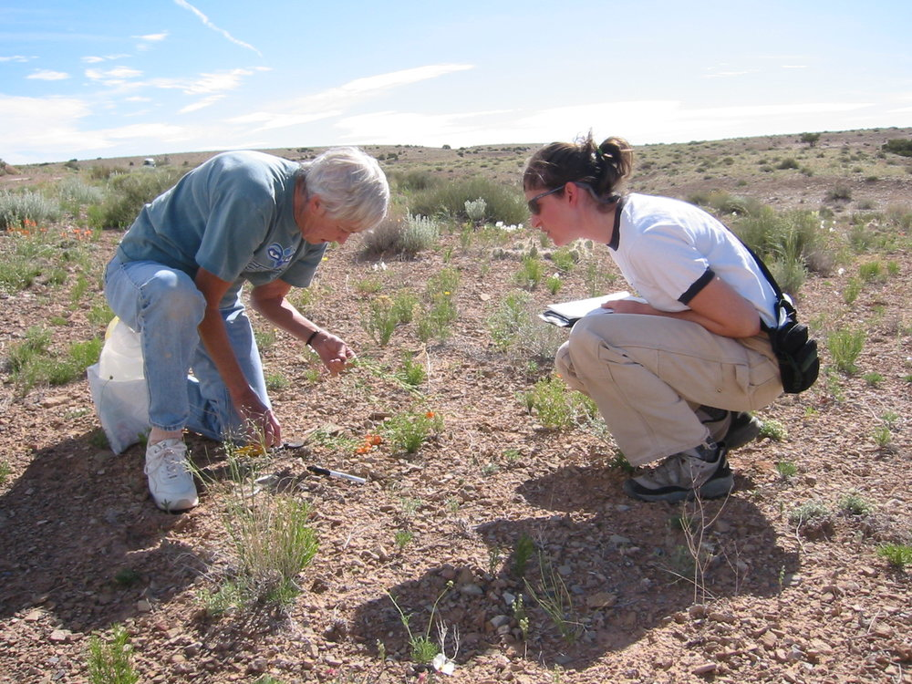 Former Wild Utah Project staff member Wendy Bates assists Botanist Elizabeth Neese with a survey for  Sphaeralcea psoraloides,  a species for which WUP wrote a status review