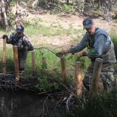 Community scientists building beaver dam analogues