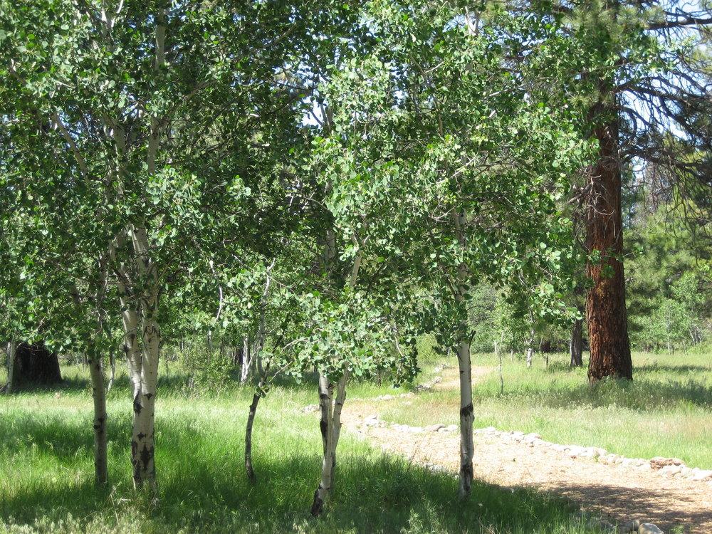 Aspen Grove (1).jpg