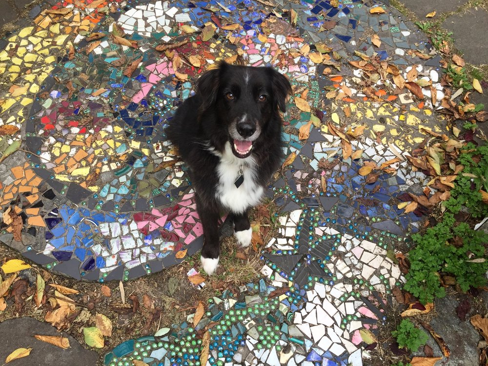 In-Your-Home  Pet Sitting -  $70 /night  $15  for each additional dog  Our sitters come into your home and give your dog a staycation of their own. We do our best to maintain your dog's current schedule which can include any or all of the following: daily walk, feeding, medications, potty breaks, and play time. They also bring in your mail, water plants, and maintain your home standards.