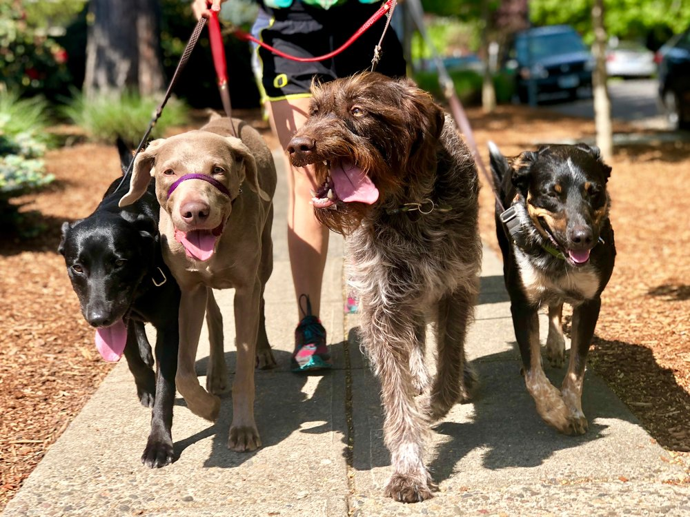 30-minute  GROUP  Walk:  $20  (8 or more)   $25  A la carte  $10  for each additional dog   $160  8 Walks  $240  12 Walks  $320  16 Walks  $400  20 Walks