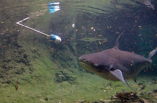Bruce (fish) target.jpg