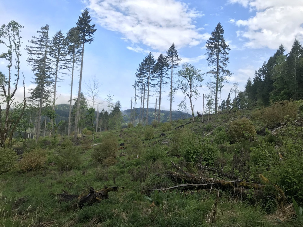 Sustainable planning, management and governance in forest landscapes