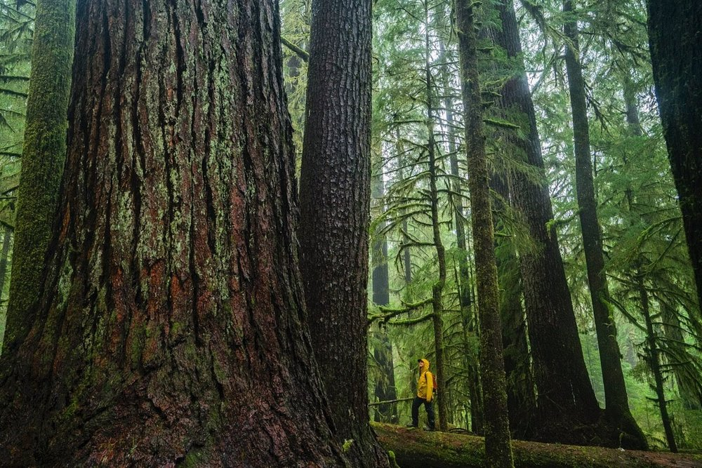 Forests and human well-being