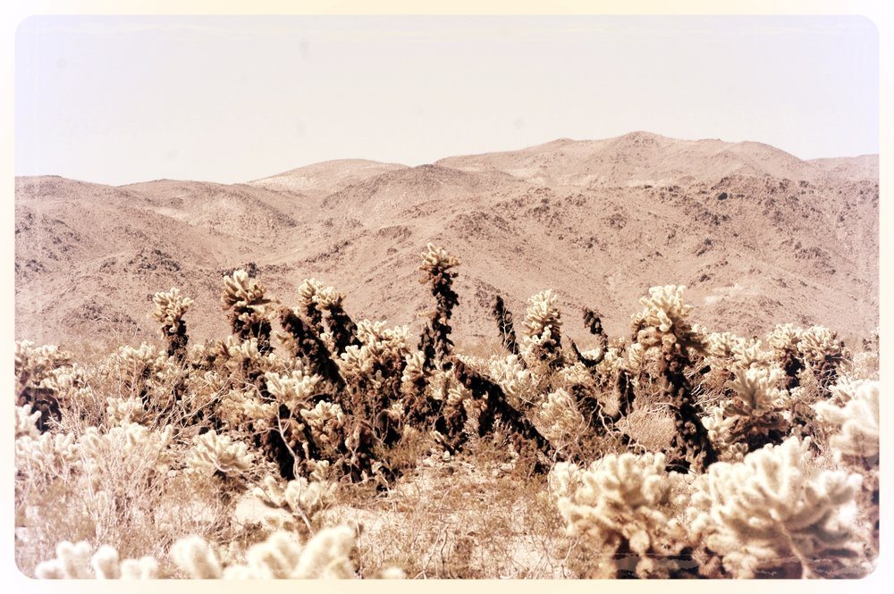Cholla Gardens and Mountains