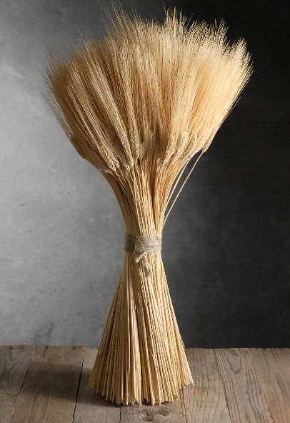 Bundle-Of-Wheat