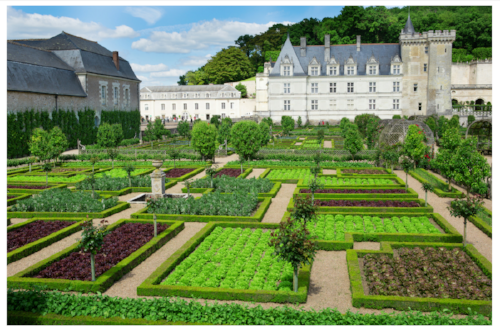 Here at Villandry, the parterre gardens are organized by trimmed box hedges.
