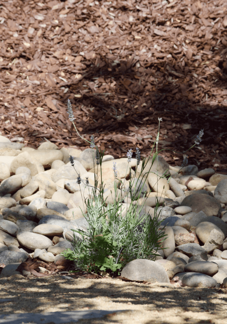 Here is a close-up of the dry creek bed, French Lavender edging and decomposed granite path in front.
