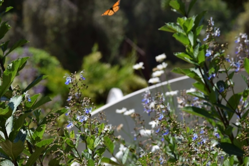 Caught a butterfly on camera in this garden shot