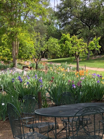 A view of the picnic area at Horton Iris Garden.  Looking closely at the background you can spot the iron bed with planted flowers.  Photo credit: Leha Nguyen