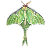 evensmallermoth.png