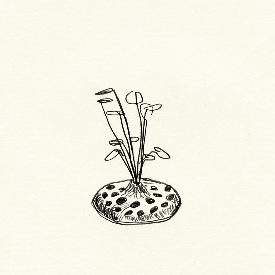 flea-07.jpg