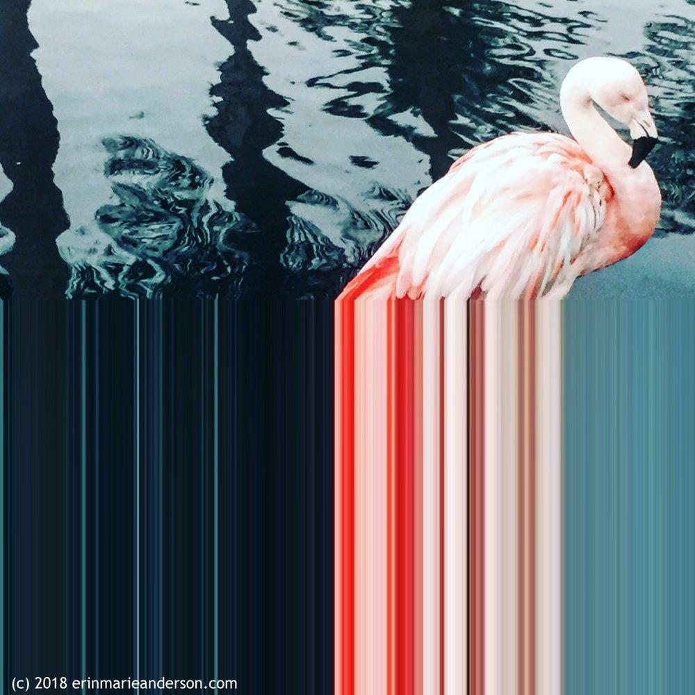 Flamingo Palm Springs 2017.JPG