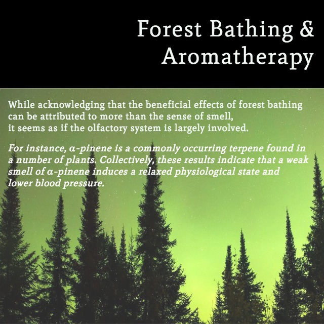 Self Care Saturday - Forest Bathing (2).jpg