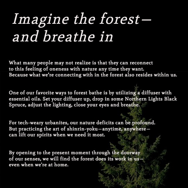 Self Care Saturday - Forest Bathing (3).jpg