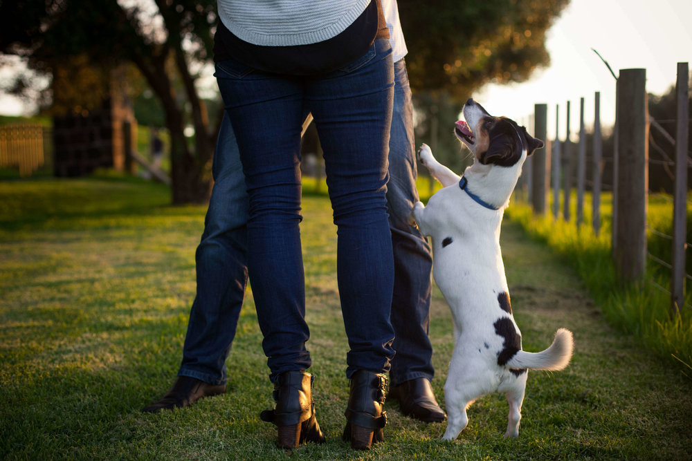 engagement-photos-with-dog.jpg