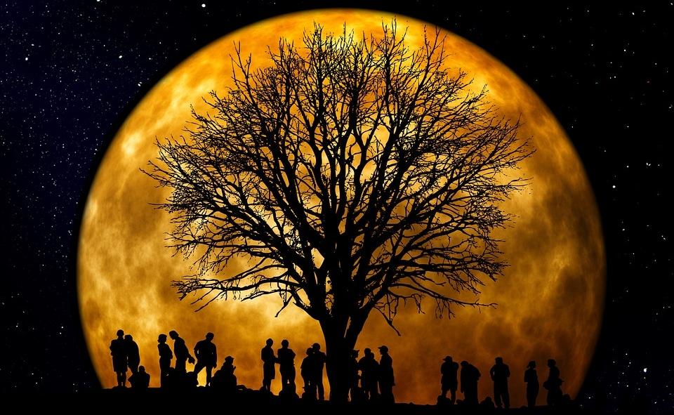 tree-66465_960_720.jpg