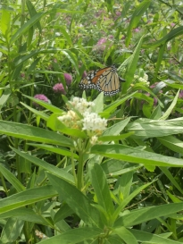 The Butterfly House at Coastal Maine Botanical Gardens. Look closely at the Monarch butterfly.