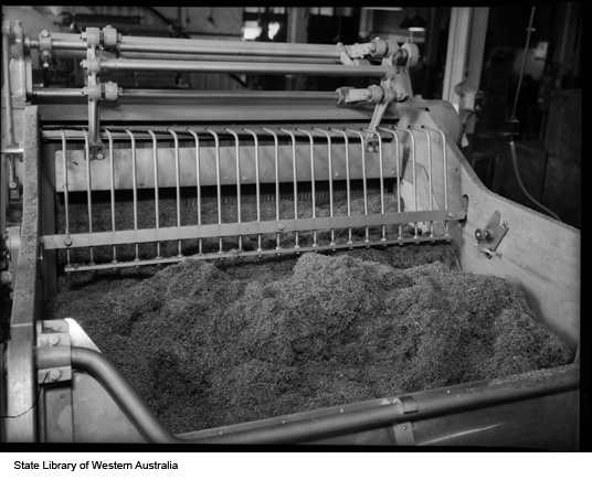 Chopped up tobacco leaves at Michelides Tobacco Factory, 1951