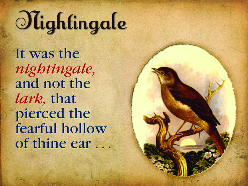 nightingale.jpg