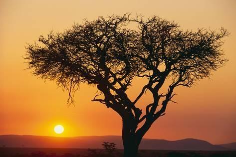 Tree with sunset.jpg