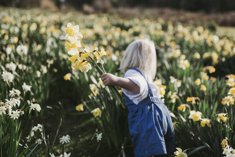 Girl holds daffodils in blue overalls for photo shoot for Minouc