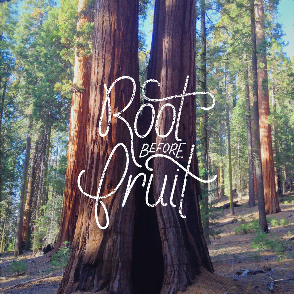 root_before_fruit-picture.jpg