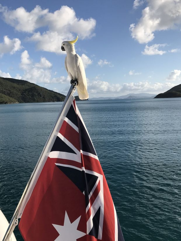 Imagine my surprise to find this cheeky and curious cockatoo landing on our boat while cruising the Whitsunday Islands. I was so excited to capture this special moment, this flag is the traditional Ensign marine Australian flag!