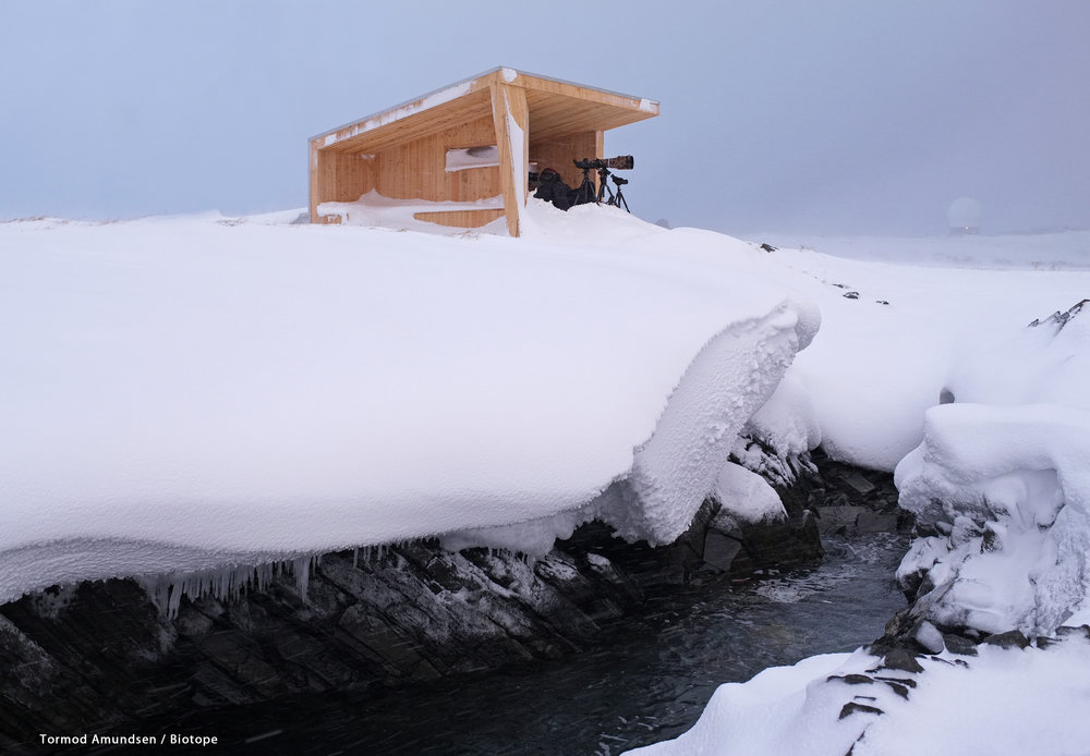 Steilnes bird hide march2013 Amundsen Biotope.jpg