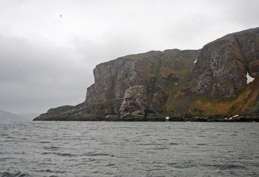 Bird cliff Syltesfjordstauran