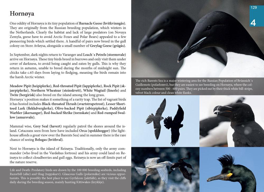 Birding_Varanger_11_03_16_Pages-129.jpg