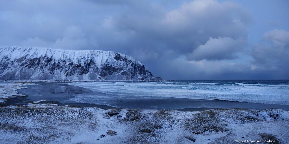 Arktische Küste