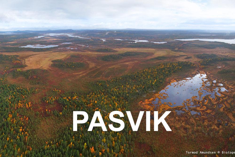 Pasvik_Varanger_Copyright_Biotope