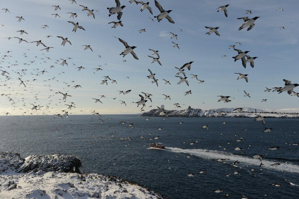 Stadt der Seevögel