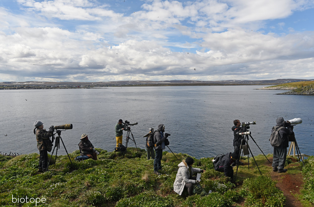 birders in Varanger at Hornøya bird cliff june 2015 med res - Amundsen © Biotope.jpg