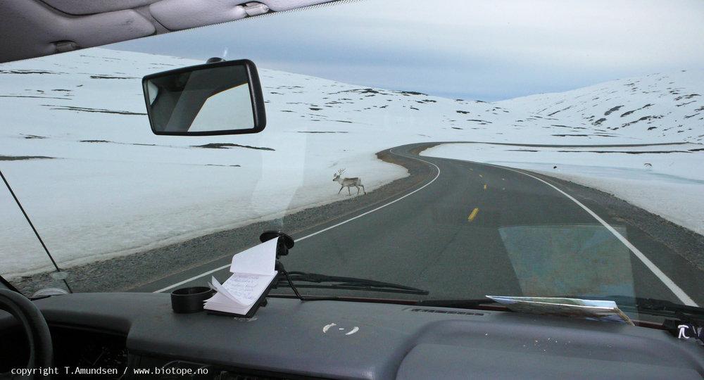 nordkyn may2010 Tamundsen Biotope.jpg