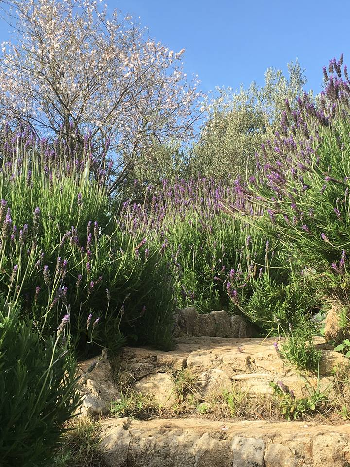 Sweet-smelling lavender at our luxury villa rental in Ronda, Andalucia, Spain