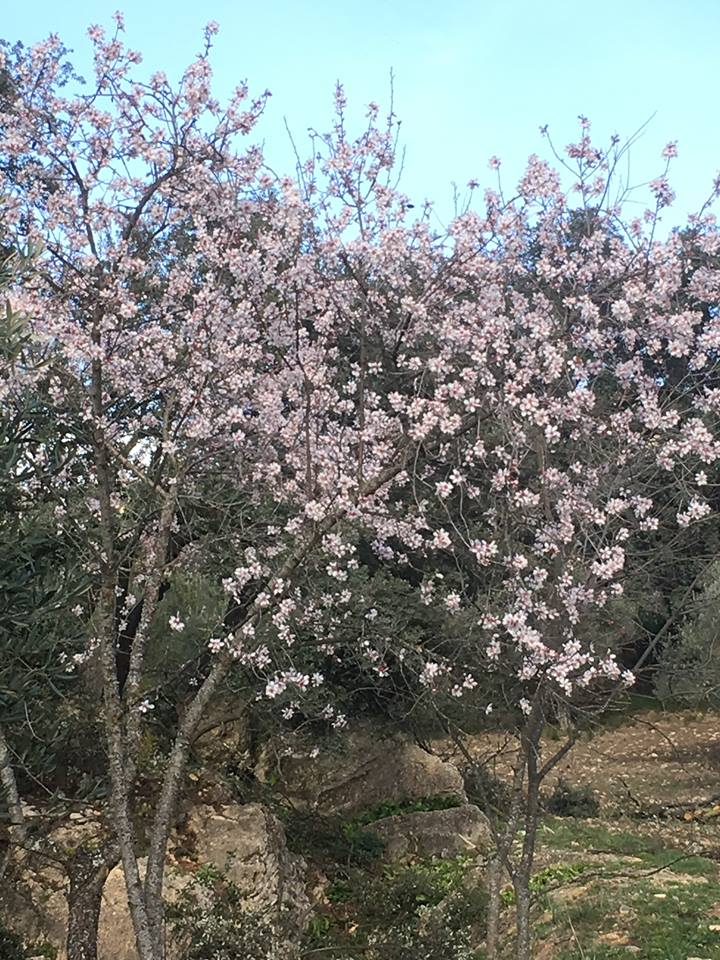 Spring blossoms at our luxury villa rental in Ronda, Andalucia, Spain