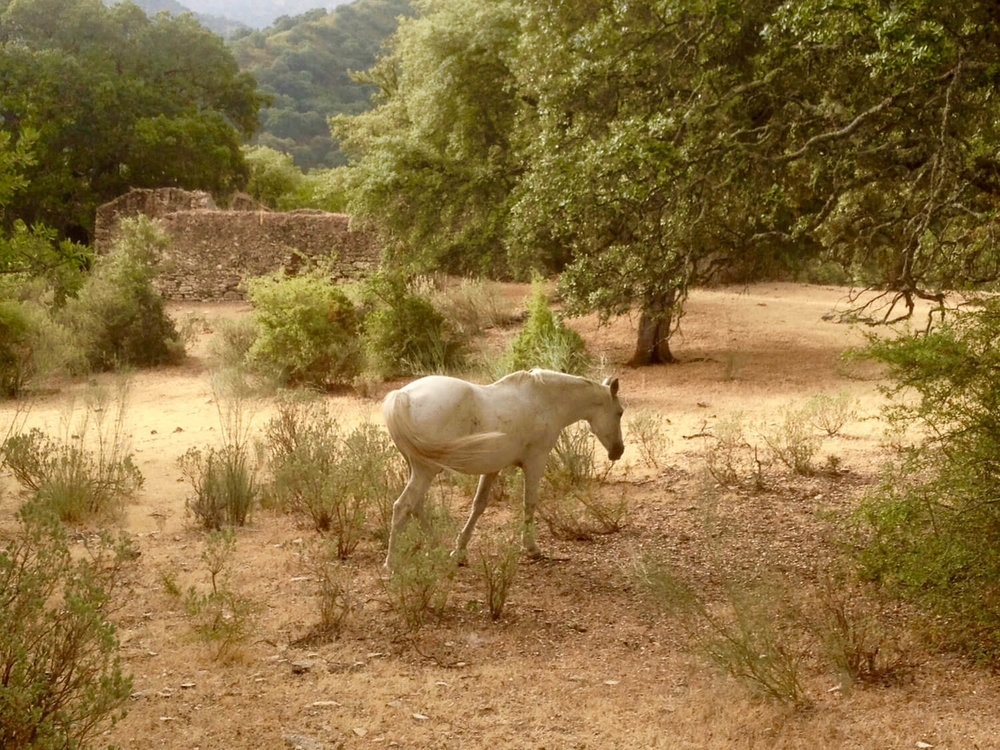 Horses_in_the_grounds_at_luxury_villa_rental_in_Ronda_Spain