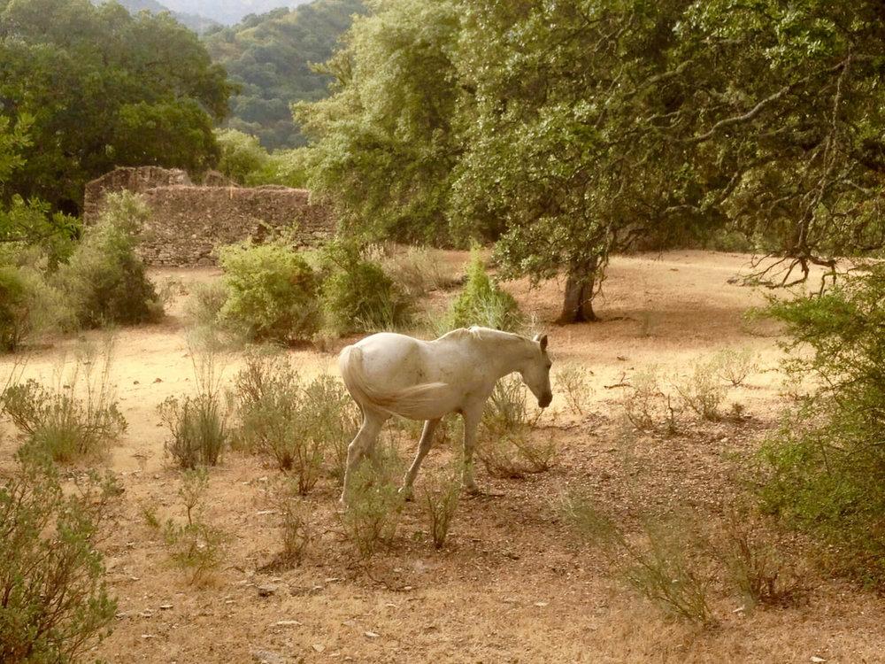 la-cazalla-white-horse.jpeg