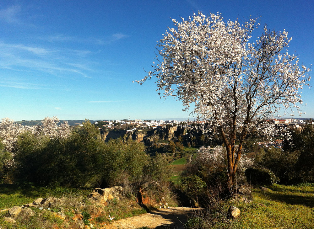 Almond Blossoms and Ronda: luxury villa rental in Spain