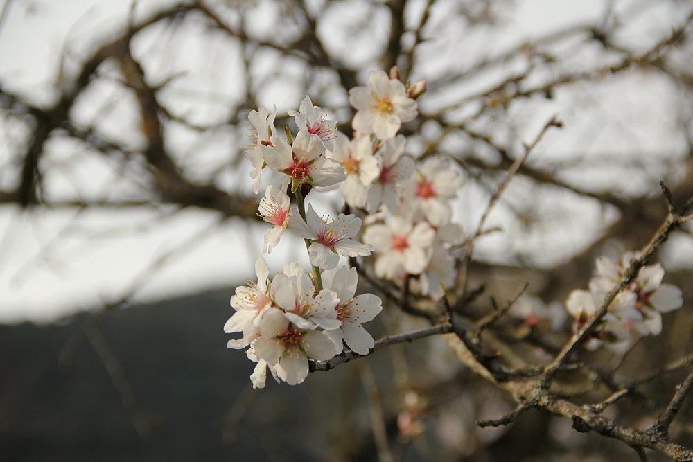 Almond Blossom at La Cazalla: a luxury villa rental in Spain