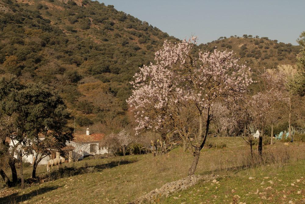Blossom at La Cazalla: a luxury villa rental in Spain
