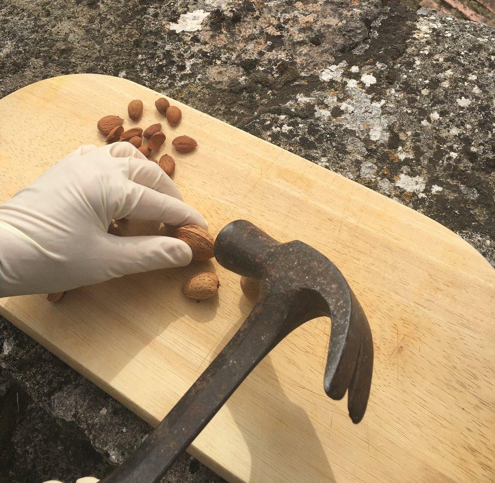 Cracking almonds at La Cazalla: a luxury villa rental in Spain