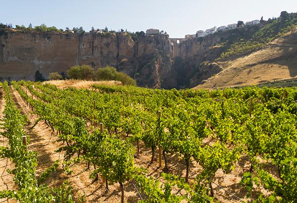 Samsara Wines, Ronda, Spain