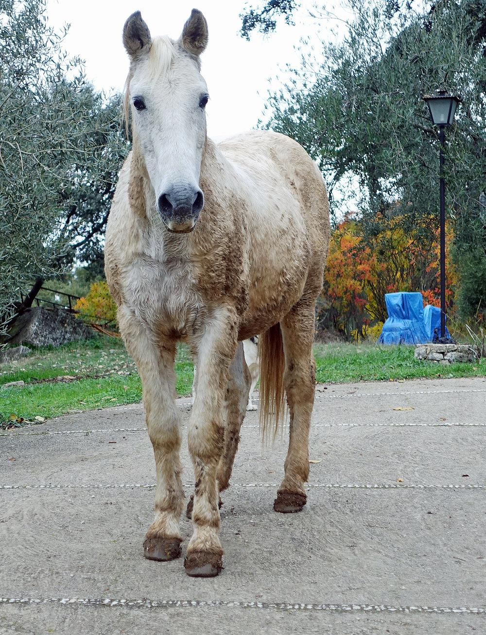 Horse_at_luxury_villa_rental_in_Ronda,_Spain:_La_Cazalla_de_Ronda