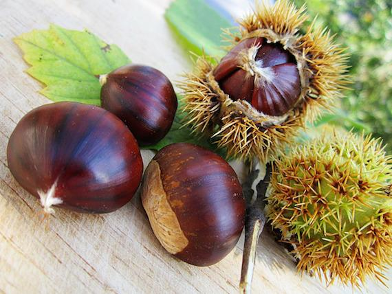 Chestnuts_at_luxury_villa_rental_Ronda_Andalusia_Spain