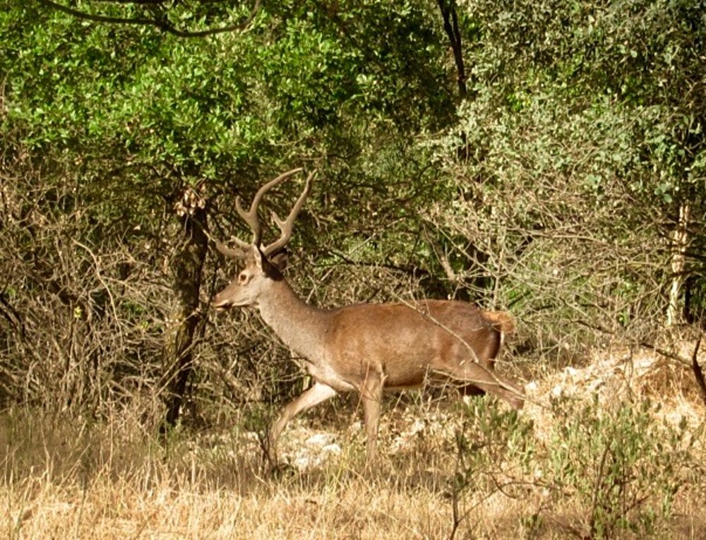 red_deer_at_luxury_villa_rental_ronda_andalusia_spain